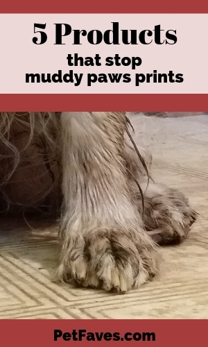 Muddy dog paws on linoleum flooring