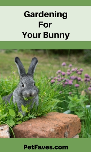 Grey pet rabbit sitting in an herb garden