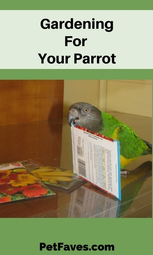 Senegal parrot holding seed packet