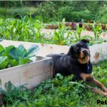 Gardening For Pets