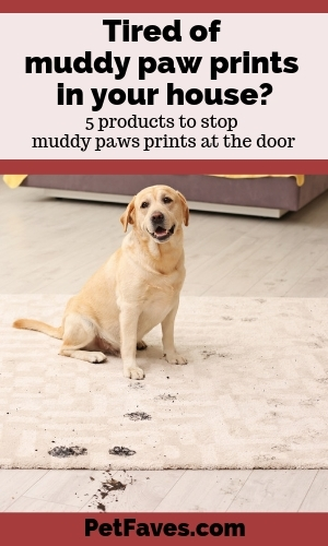 yellow labrador retriever with tracked muddy paw prints all over the floor and rug