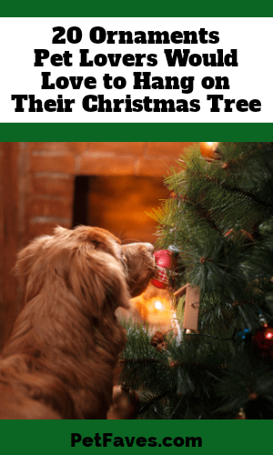dog looking at decorated Christmas tree