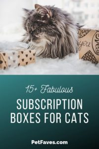 Long Hair grey cat laying by subscription boxes