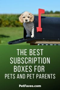 Cocker Spaniel Puppy waiting in mailbox for his dog subscription box