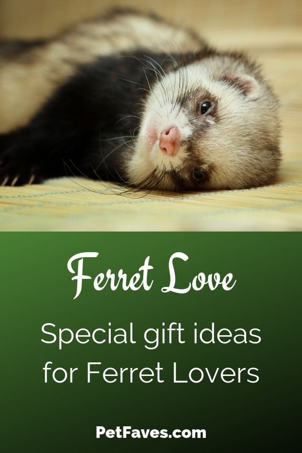 Gift ideas for ferret lovers showing brown ferret laying on his side