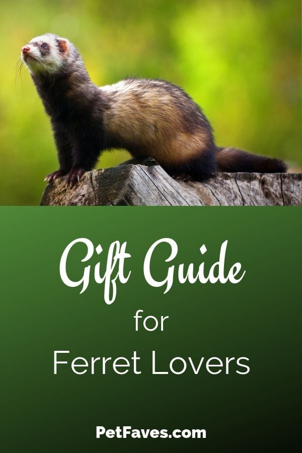 Ferret Gift Guide showing brown ferret standing on a stump