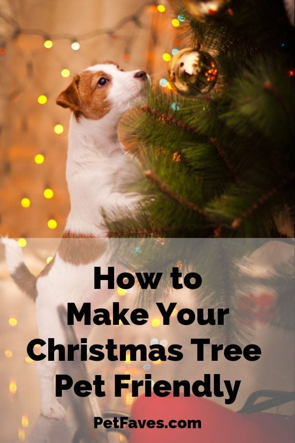 Jack Russell puppy trying to reach Christmas tree ornament showing why it's important to pet-proof the Christmas tree