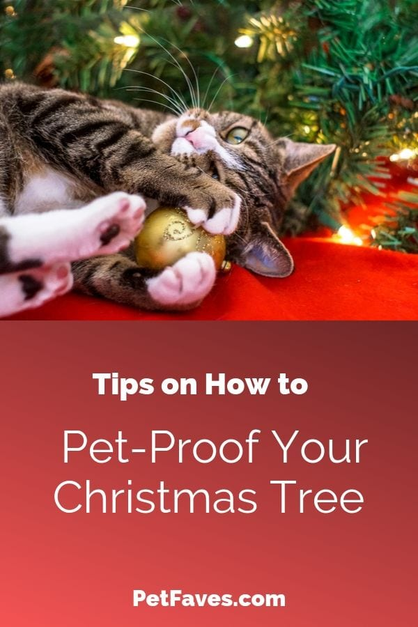 brown tabby cat playing with christmas tree ornament on a tree that needs to be pet-proofed
