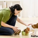 pet sitter petting a King Charles cavalier spaniel