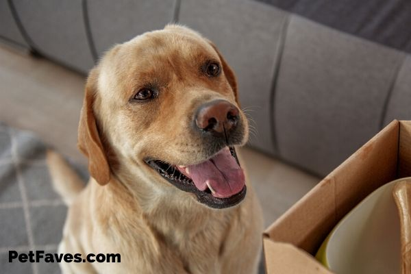 The Ultimate List of Dog Subscription Boxes