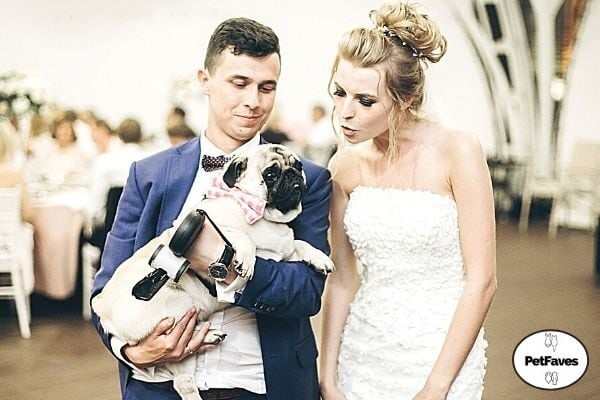 bride and groom with pug dog
