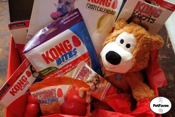 Subscription KONG Box for Dogs Review